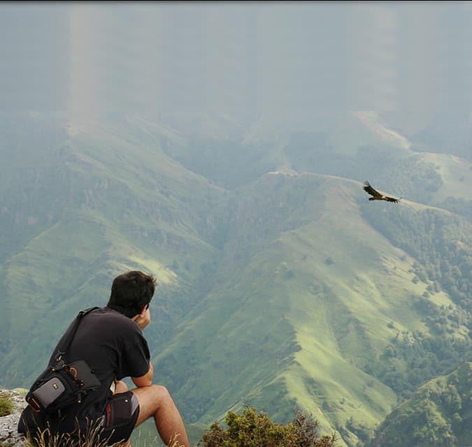 Bird Watching - Allita