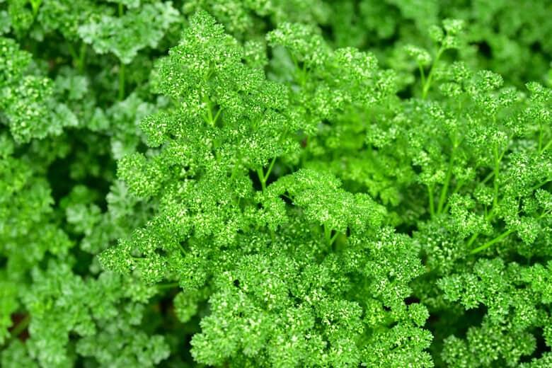 Chef's Organic Garden 04